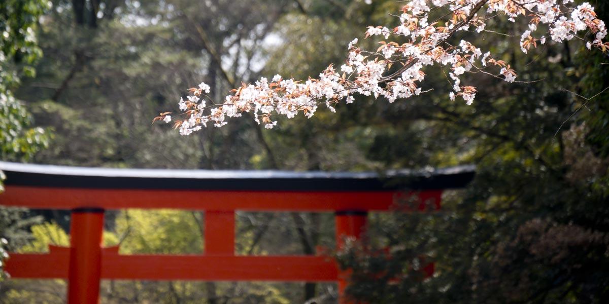 Shimogamo Shrine Featured Image