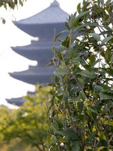 Five Story Pagoda of Toji Temple