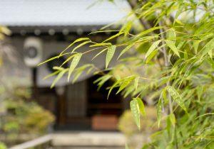 Kanga-an Garden 2