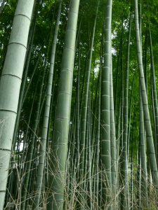 Bamboo Grove Image