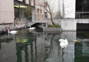 Prince Shotoku Pond Image