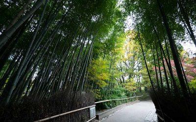 Arashiyama Virtual Walking Tour